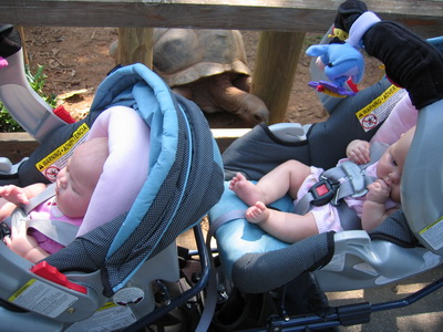 Brina and Karlie's first trip to the Zoo - see the turtle in the background (Karlie is awake but Brina is snoozing)c